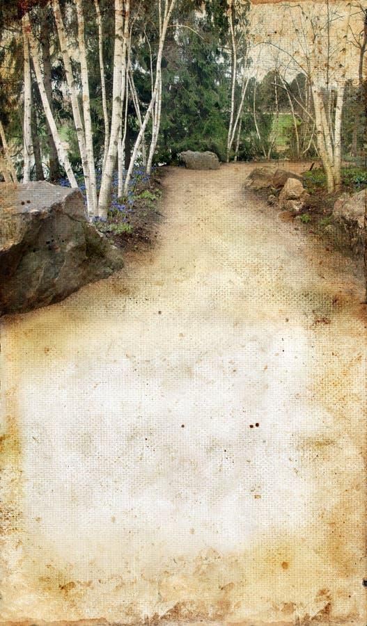 Birken-Bäume auf einem grunge Hintergrund lizenzfreies stockfoto