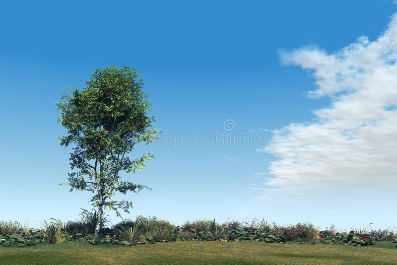 Baum Und Garten birken baum und garten stock abbildung illustration wachstum