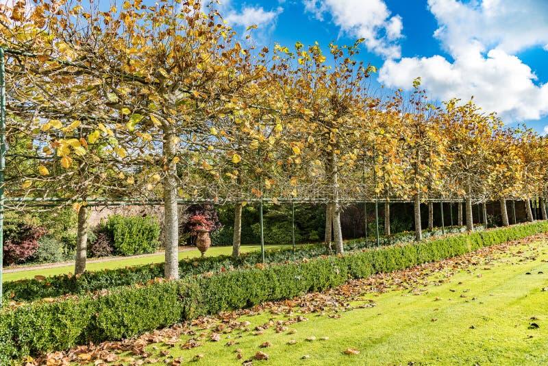 Birken mit orange Blättern stockfoto