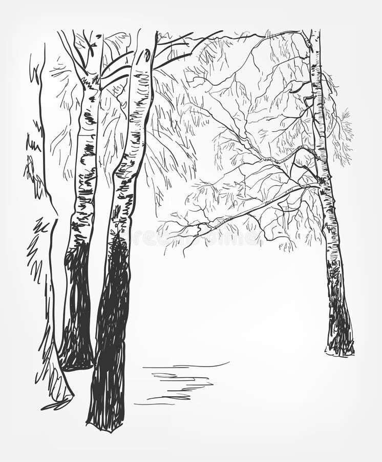 Birkenhintergrundvektor-Skizzenlinie Aquarellbaum vektor abbildung