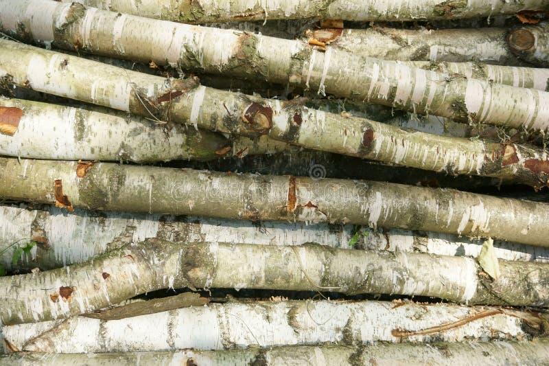 Birkenholzbeschaffenheit lizenzfreie stockfotos