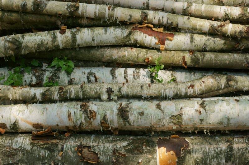 Birkenholzbeschaffenheit lizenzfreies stockfoto