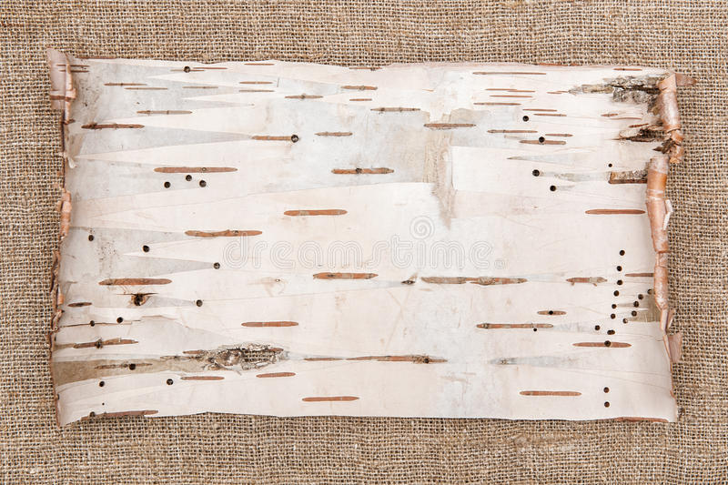 Birkenrinde auf Leinwandhintergrund lizenzfreie stockfotografie
