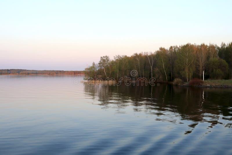Birkenwaldung auf Banken von Volga stockfotos