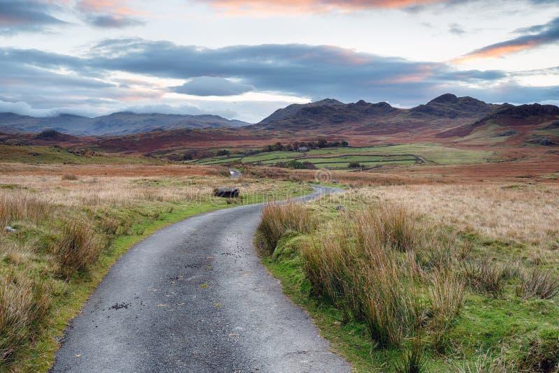 Birker caiu em Cumbria foto de stock
