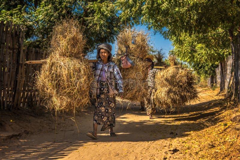 Birmańscy rolnicy niesie siano na plecy obrazy stock