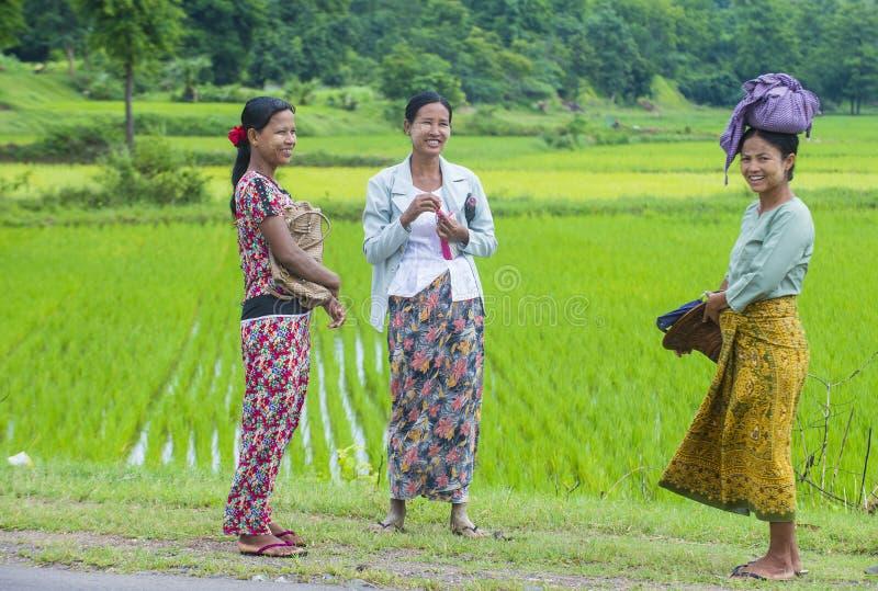 Birmańscy rolnicy przy ryżu polem zdjęcia stock