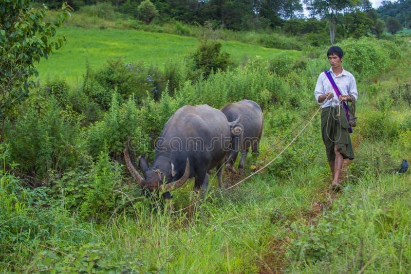 Birmańska baca w Myanmar obrazy royalty free
