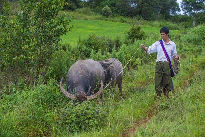 Birmańska baca w Myanmar obraz stock