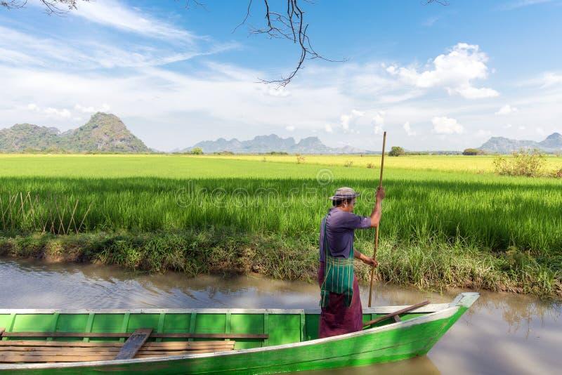 Birmaanse boatman in padieveld royalty-vrije stock foto's