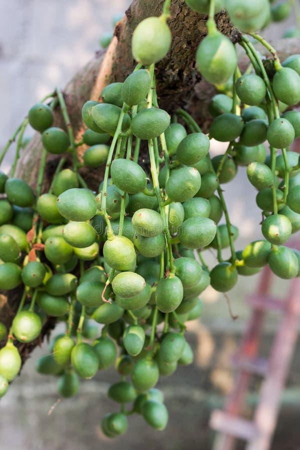 Birmaanse druif of Rambai stock foto's