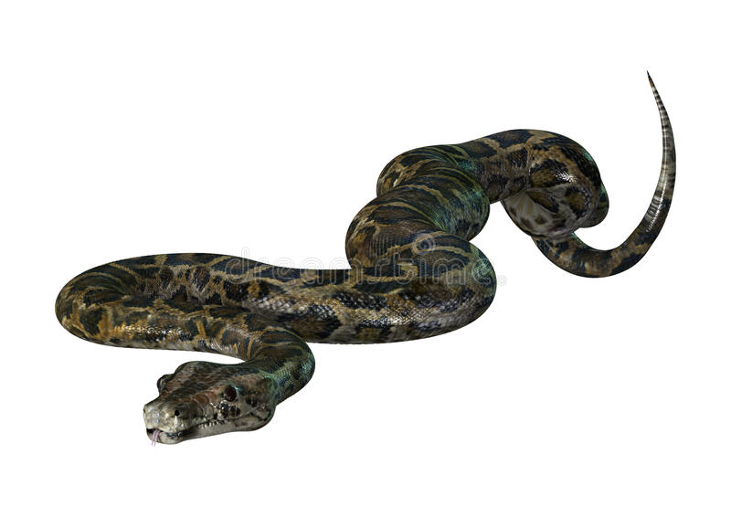 Birmaanse Python op Wit stock afbeelding