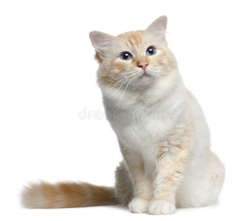 cat upper respiratory infection medicine