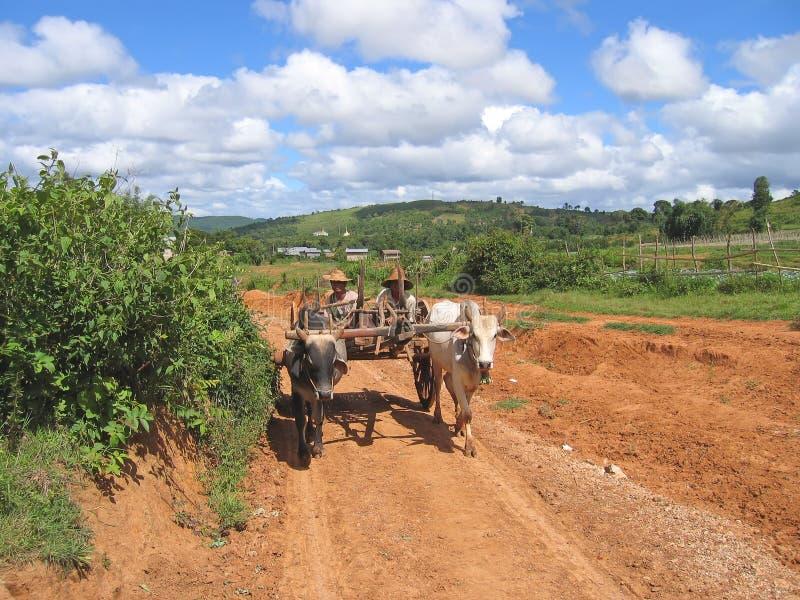 Birman Landwirte, die einen Wagen antreiben lizenzfreies stockbild