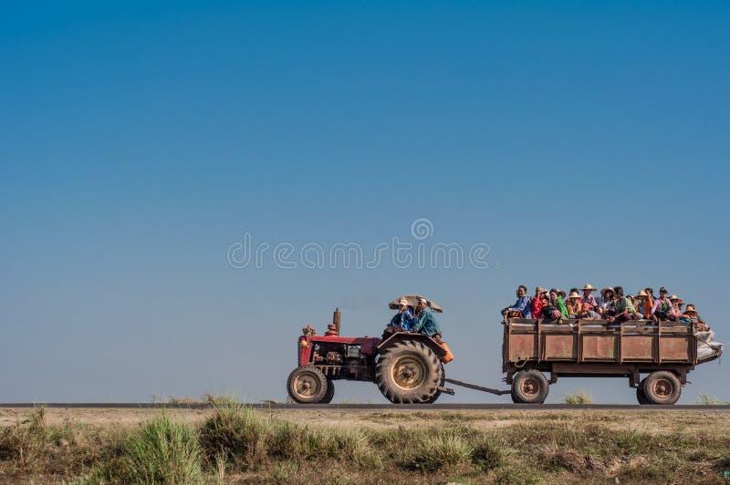 Birmane gehen zusammen stockfotos