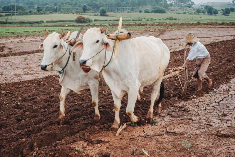 Birmanische asiatische Leute, die an Landwirtschaftsfeld arbeiten lizenzfreies stockfoto