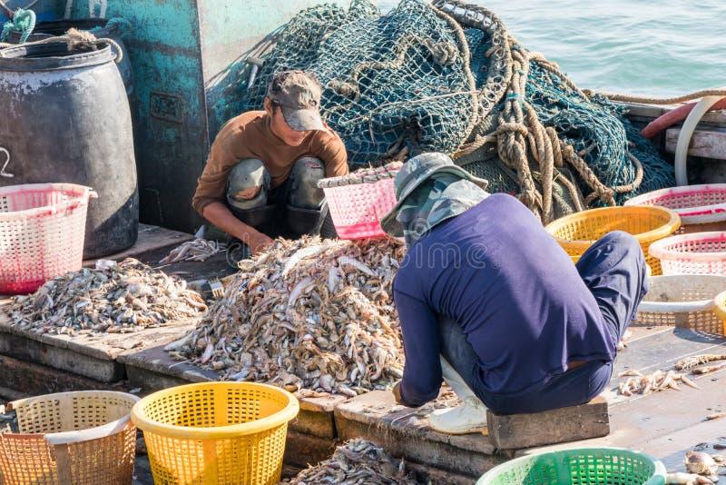 birmanische Besatzung des thailändischen Fischereifahrzeugs, das den Fisch sortiert stockfoto