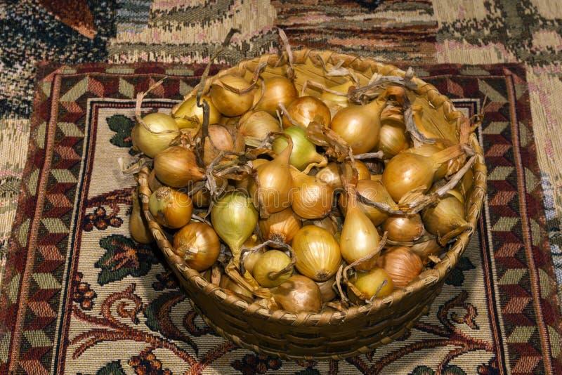 Birnen der gelben Zwiebel, bestimmt für das Pflanzen, in einem kleinen Birkenrindekorb stockbild