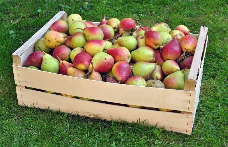 Birnen - Fruchternteertrag lizenzfreies stockbild
