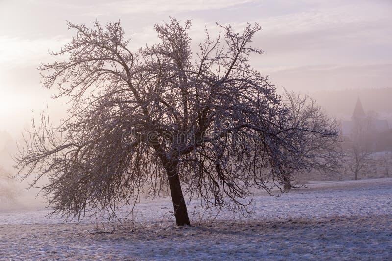 Birnenbaum auf einem nebeligen Wintermorgen stockfotos