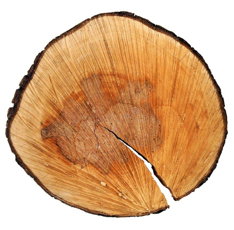Birnenbaumstammquerschnitt stockfotos
