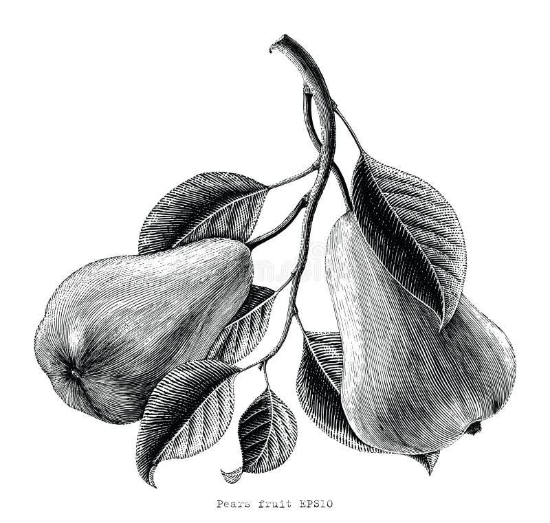 Birnenfruchthandzeichnungsweinlese-Stichillustration auf Weiß lizenzfreie abbildung