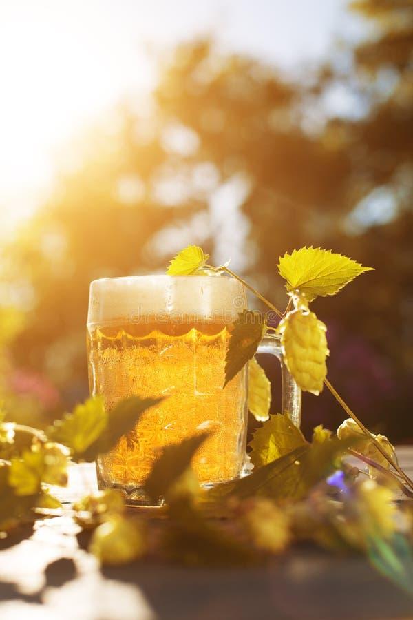 Birra Aggredisca con la birra ed il luppolo sul fondo di autunno dell'estate del tramonto fotografia stock libera da diritti