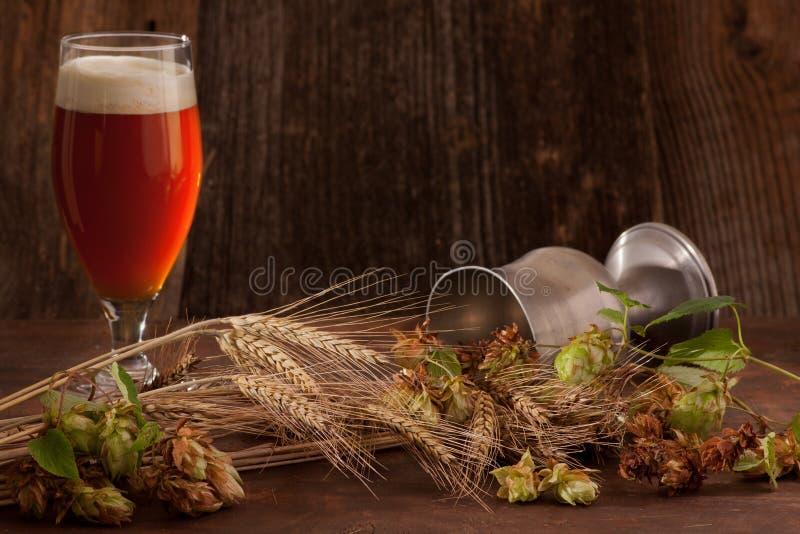 Birra con i luppoli e l'orzo fotografia stock libera da diritti