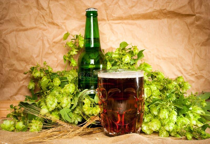 Birra con il luppolo ed il frumento immagini stock libere da diritti