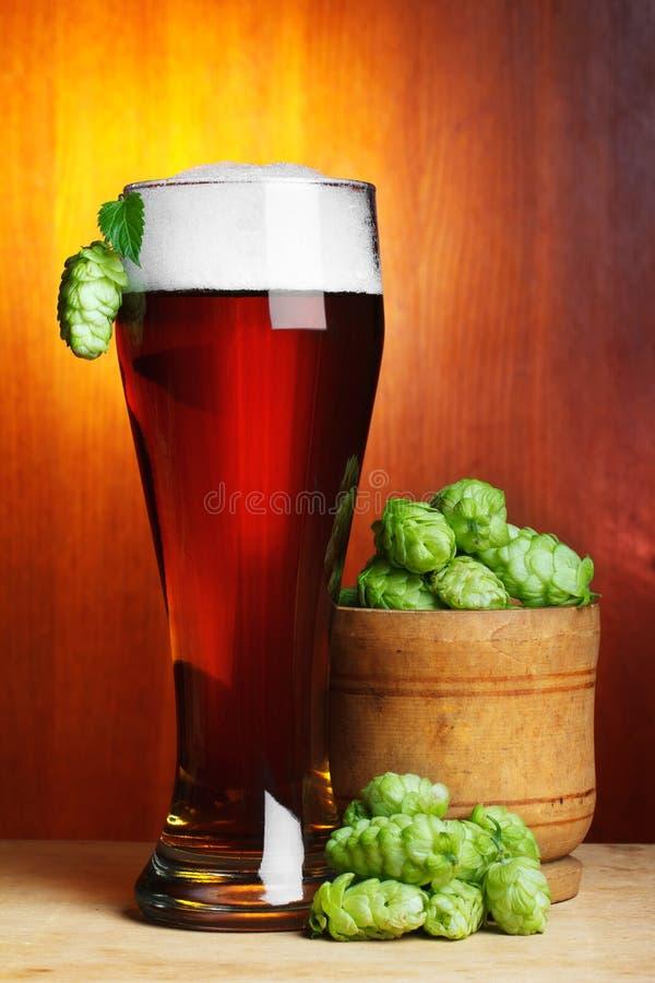 Birra con il luppolo maturo fresco immagine stock