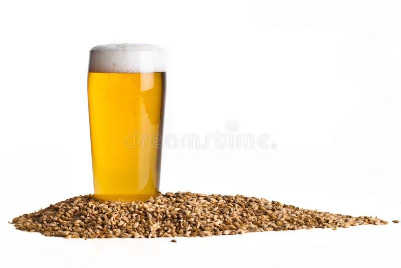 Birra con orzo immagini stock libere da diritti