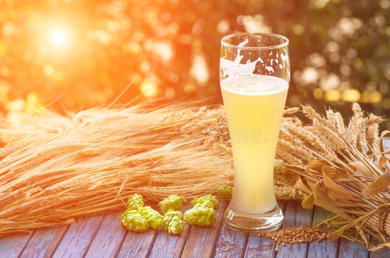 Birra non filtrata leggera, luppolo, malto, fondo fotografia stock