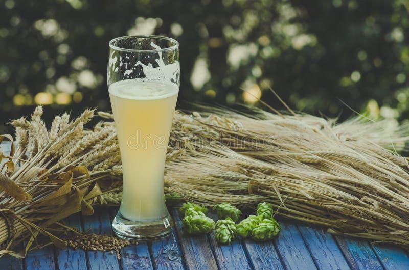 Birra non filtrata leggera, luppolo, malto, fondo immagine stock