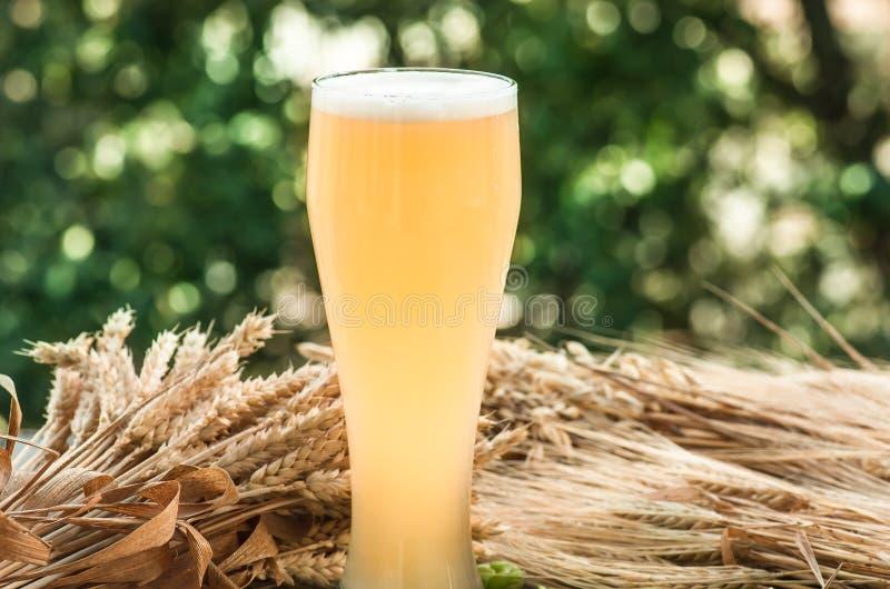 Birra non filtrata leggera, malto, fondo immagine stock libera da diritti