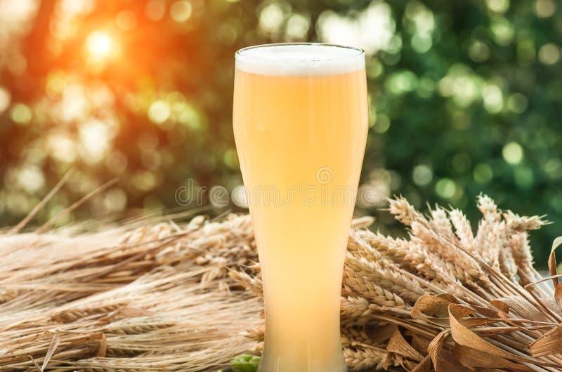 Birra non filtrata leggera, malto, fondo fotografie stock libere da diritti