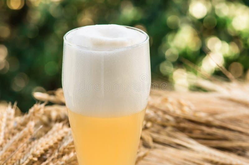 Birra non filtrata leggera, malto, fondo immagini stock libere da diritti