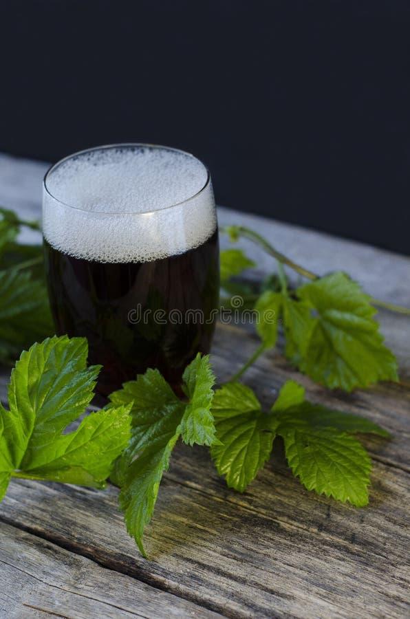 Birra scura in un glasswith un ramo del luppolo Giorno della birra immagine stock