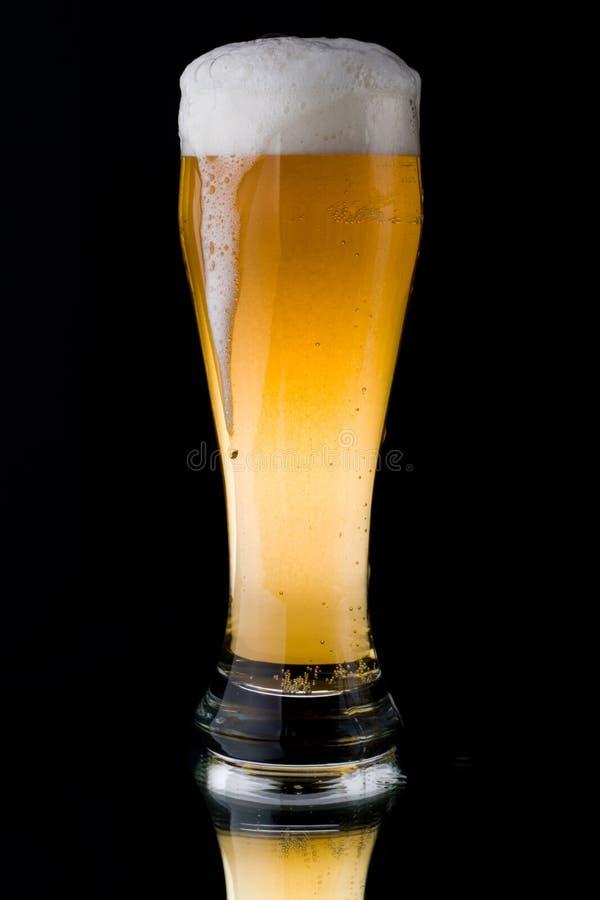 Birra spumosa fresca immagine stock