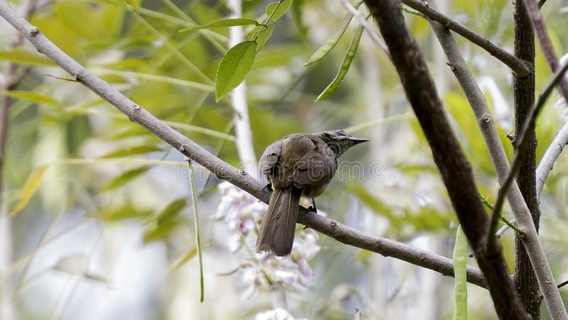 HoanhHoach Bird royalty free stock images