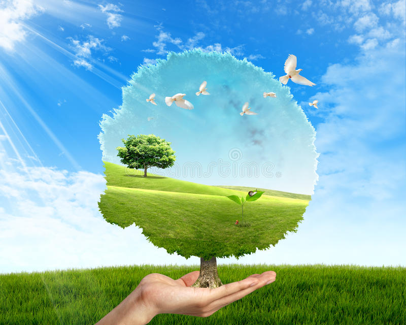 The birth. Representative image the birth. A hand that sustains a tree in which a small thread of grass is present that grows and the birds that fly stock illustration