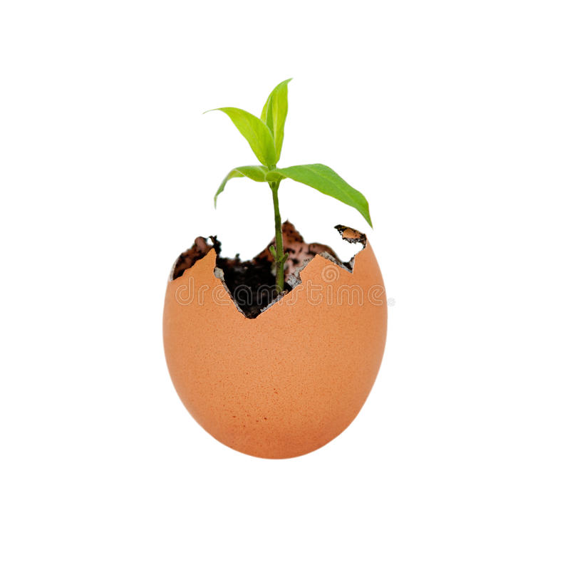 Birth of new life growth. Brown egg shell cracked open with Earth dirt sand and sprouting green plant growing metaphor for new life and environment, isolated stock photos