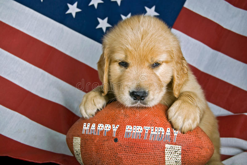 Birthday Ball. Golden retriever on a football with birthday message royalty free stock photo