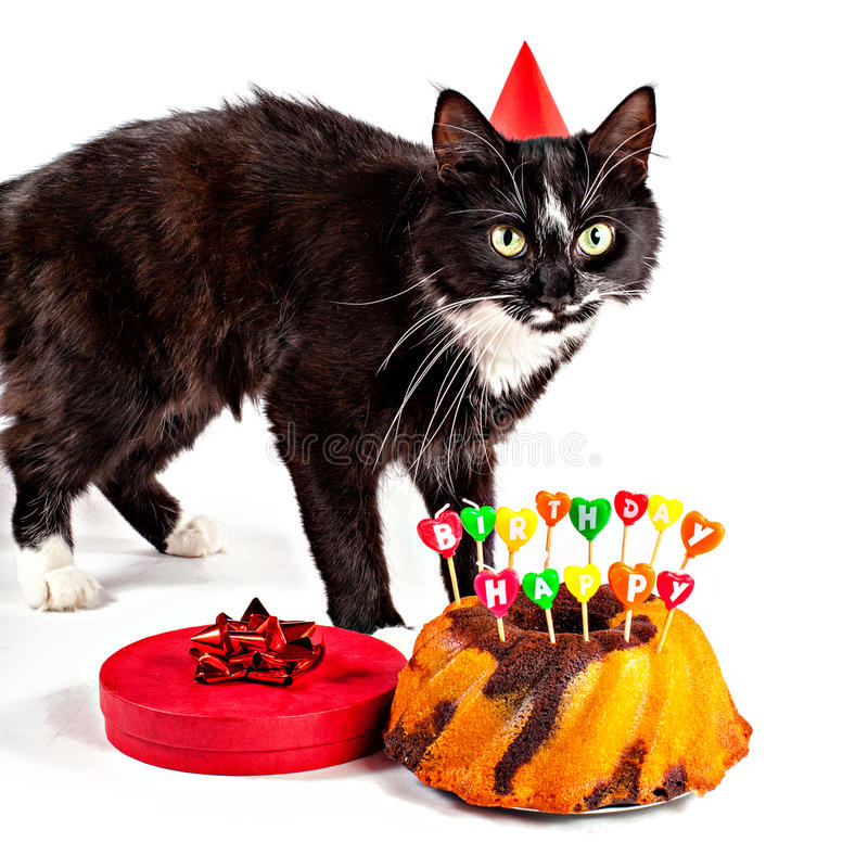 Birthday Black-white Cat Stock Image. Image Of Gift, Party