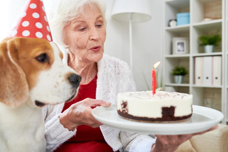 Birthday cake for dog. Positive excited senior woman holding plate with delicious cake with burning candle and celebrating favorite dog in party hat with first stock photography