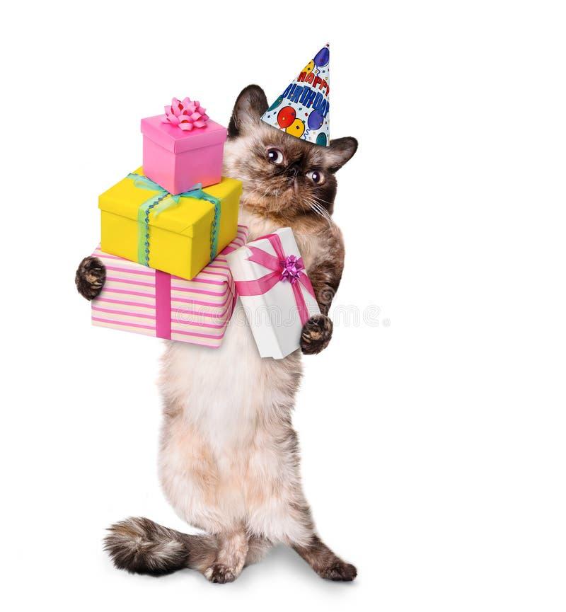 Birthday cat . royalty free stock image