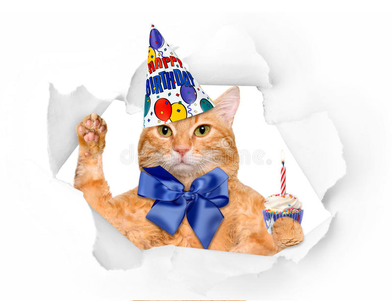Birthday cat . royalty free stock photography