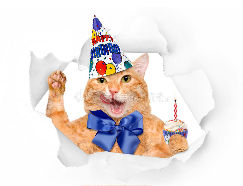 Birthday cat . Isolated on white royalty free stock photo
