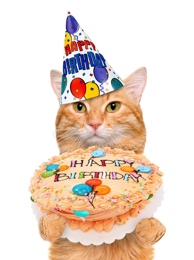 Birthday cat . Isolated on white royalty free stock photography