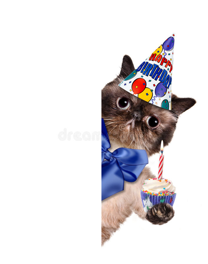 Birthday cat . The white banners royalty free stock photos