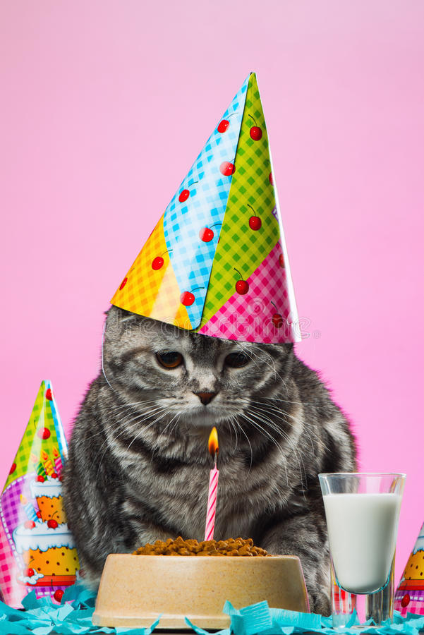 Birthday cats stock photos